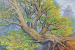 Überhängender Baum