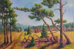 Stürzende Bäume im Hohen Venn