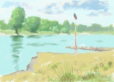 Rheinufer mit Kormoran